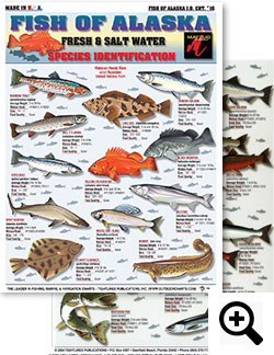 Fish Of Alaska Id Chart 16 R Fishing Freshwater Rainbow Trout Ling Cod Chinook Salmon Dolly Vardin Yellow Eye Rockfish