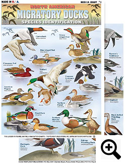 Ducks and geece hunting charts from tightlines publications