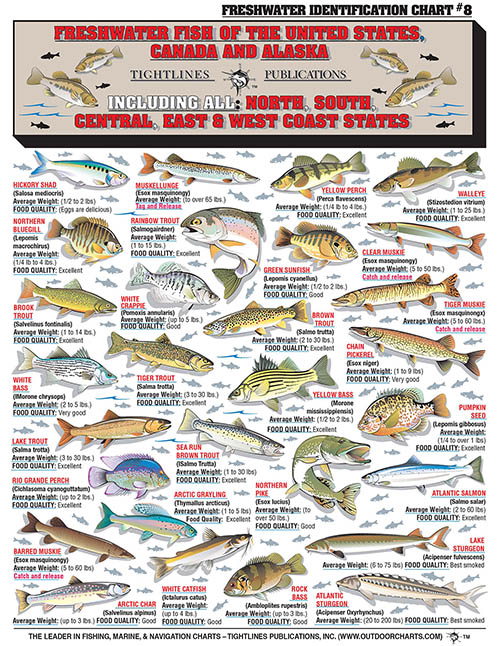 Freshwater Identification Chart 8 Contains 64 Fish Of The United States Common Latin Names Average Weights Food Quality